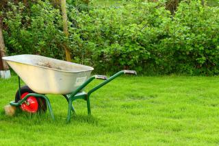 A wheel barrow on a lawn that hasn't yet been tended to in March.