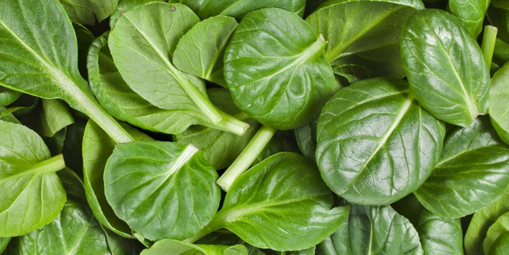 Spinach leaves, cute, roundish and ready for eating in a salad.