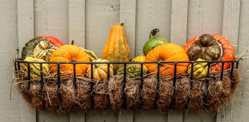 A wire basket on a wood plank wall with a wire frame filled with hay and colorful colocynth ornamental pumpkin.