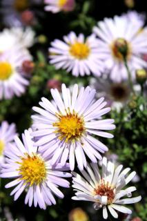 Surprising daisy-like white blooms litter the screen.