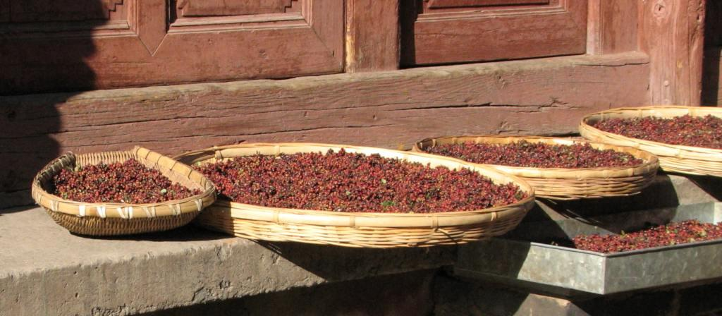 Sichuan pepper harvest drying in wicker baskets.