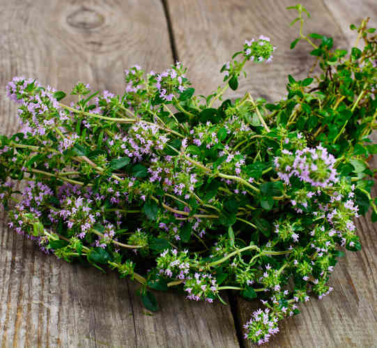 Thyme, a taste of French Provence