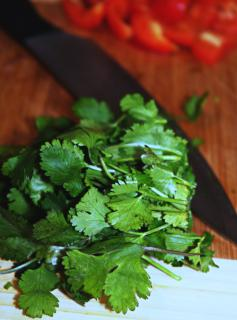 Harvested coriander on a cutting board with a knife and tomatoes.