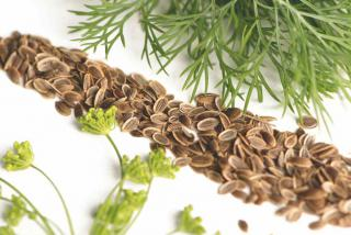 Flowers, seeds and leaves of dill used for their health benefits.