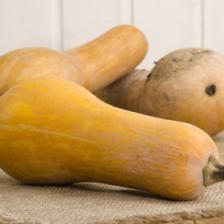 Growing butternut gourd