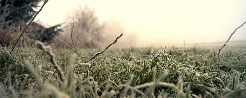 A frozen lawn will break easily if trodden over.