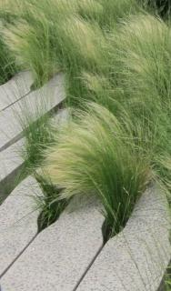 Clumps of Mexican feather grass worked in cement stone blocks.