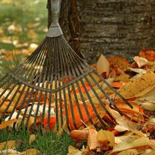 September in the garden, tasks that will get you set for fall