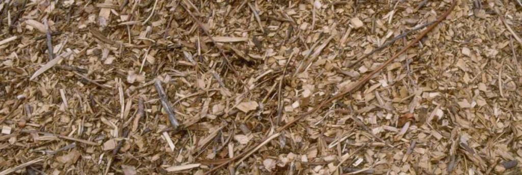 Ramial chipped wood mulch