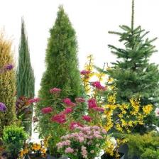 tree-shrub-nature-garden
