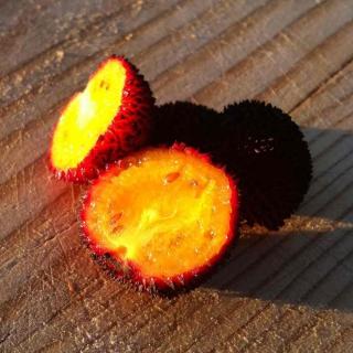 Arbutus unedo fruit sliced open