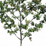 Palmette is a type of espalier pruning that resembles a fishbone.
