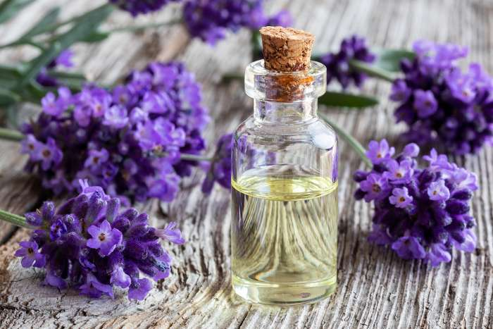 Lavender health benefits and therapeutic value
