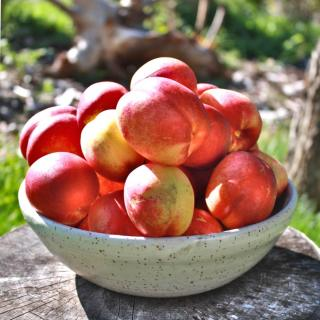 A bowl of freshly harvested nectarines