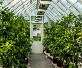 A thriving plant-filled greenhouse seen from the inside.