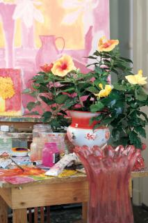 China roses of various types in ornate pots in a painter's workplace.