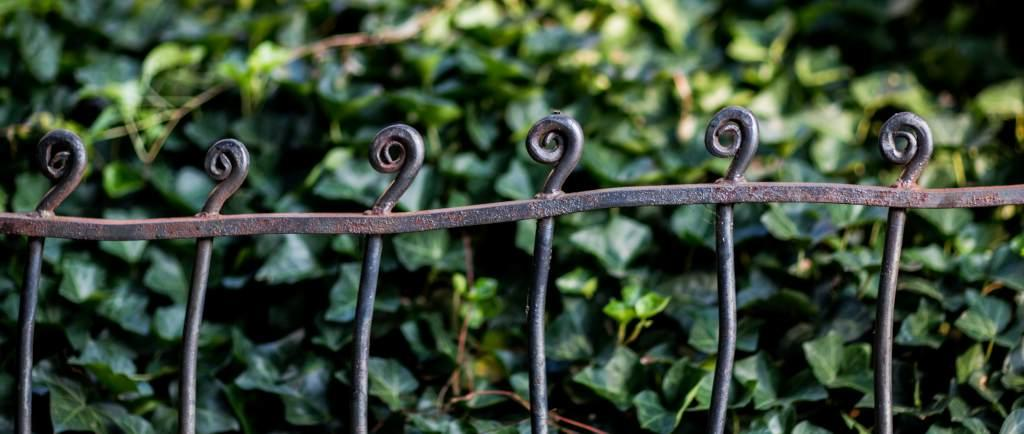 Irregular dreamy-looking wrought iron fence dancing along a hedge covered in deep green ivy.