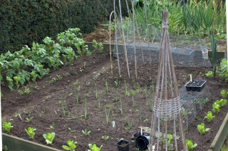 A vegetable patch with onions, garlic and leek is a great way to ensure a cancer-preventive diet.