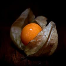 Physalis, winter groundcherry, a plant with many therapeutic properties