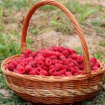 Red raspberries filling up a two-tone wicker basket.