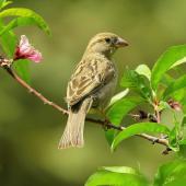 Bird vs. Bush – can there be too many birds?