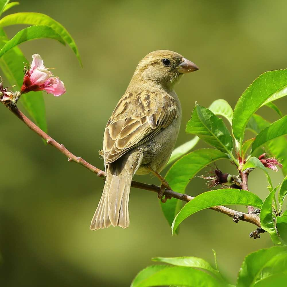 Sparrow on branch with bright green leaves