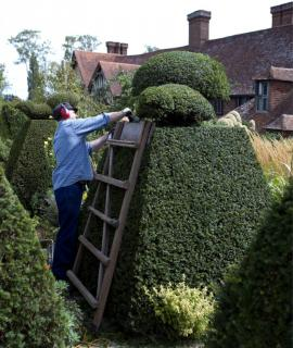 A gardener shears yew into pyramid and sphere shapes.