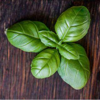 A snip of fresh basil for healthy meal preparation.