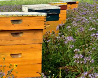 Setting up beehives helps save bees overall.