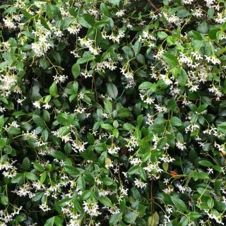 Hedge created with jasmine