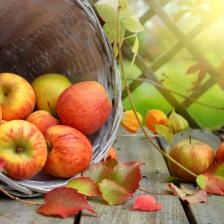 How to keep apples
