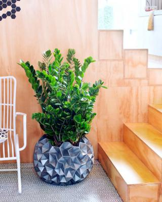 Zamioculcas, the ideal office plant