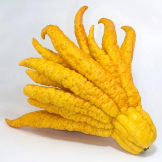 Citrus fruit shaped like a hand with twenty fingers.