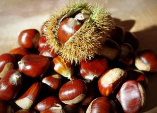 A pile of chestnuts, the topmost of which is still in the husk.