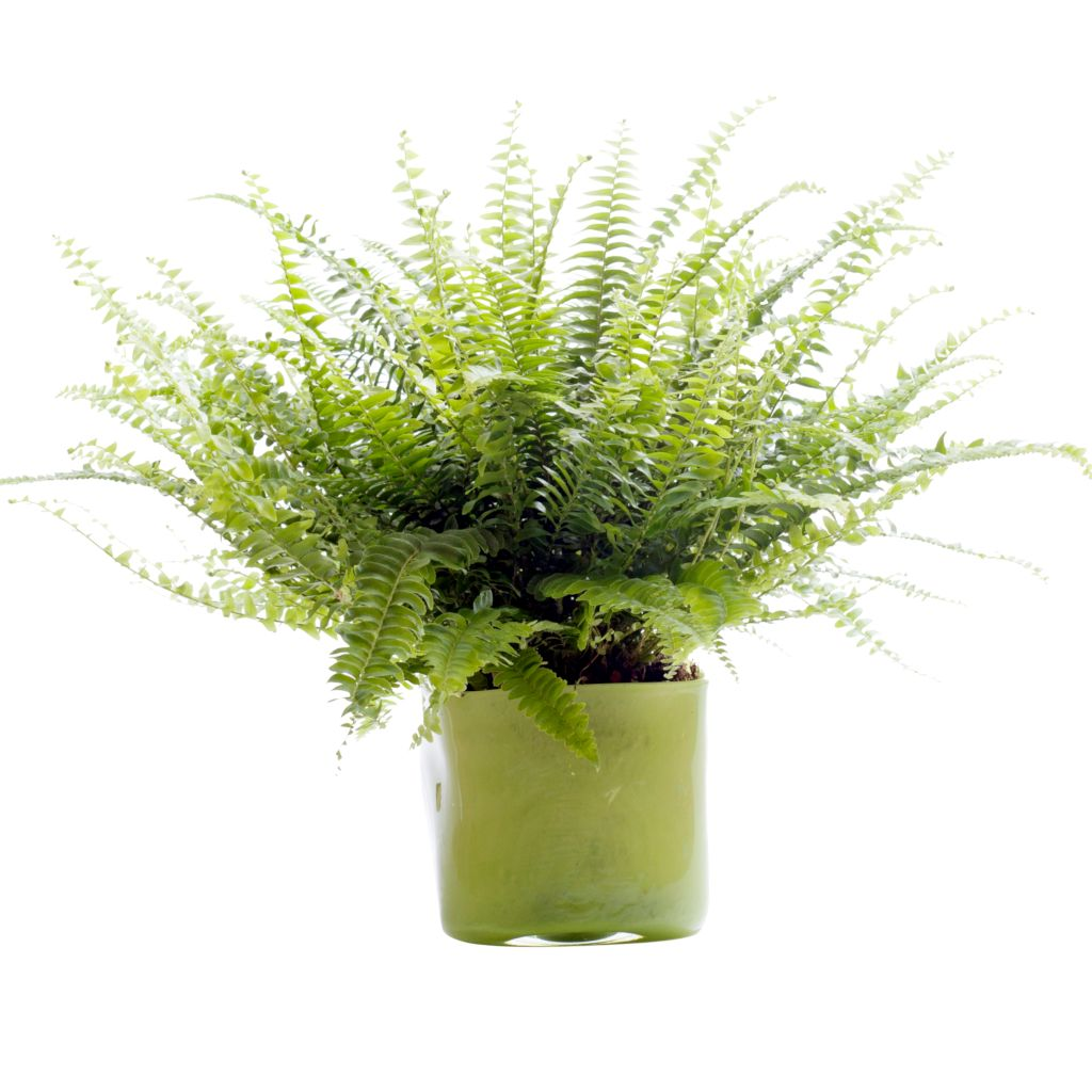 Air Purifying Plants For Bathroom: Top 10 Plants To Clean Indoor Air