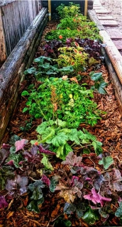 Basins filled with hydrogel crystals provide water for various plants like coleus, coral bells and ferns, covered with wood chip mulch
