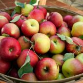Best practices to enhance fruit harvest