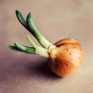 A sprouting onion on a tabletop.
