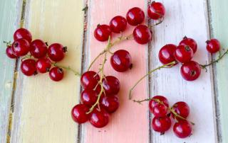 Red currant berries on a nice pastel painted background.