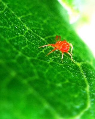 Red spider mite, what is the best treatment ?