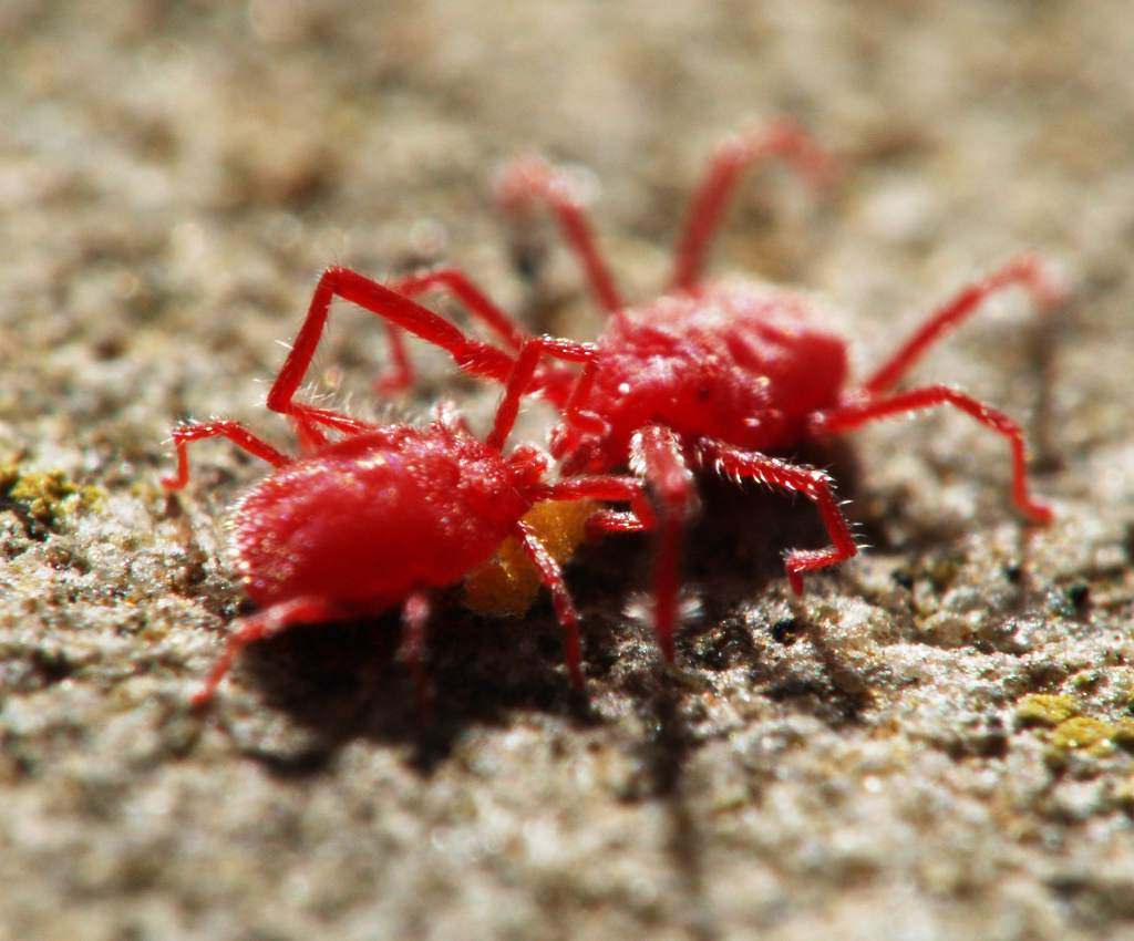 Red spider mite - treating and fighting them, easy organic solutions