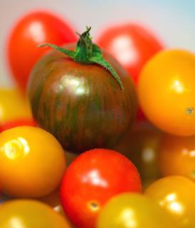 Varieties of tomato
