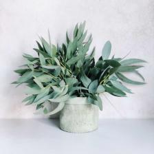 Treating cough with plants