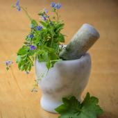 Migraine, plants and natural remedies