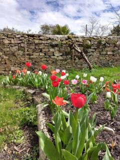 Red, white and pink tulips decorate a log-circled mulch-filled flowerbed.