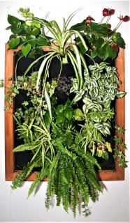 Plant wall frame filled with plants.