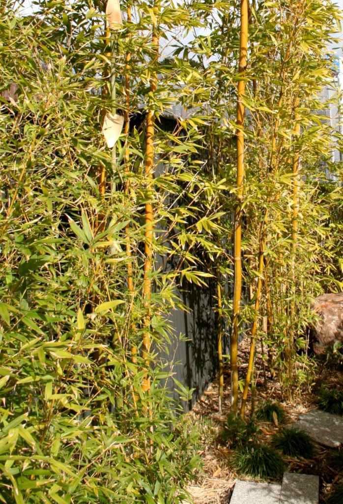 Bamboo shoots clumping together in front of a door.