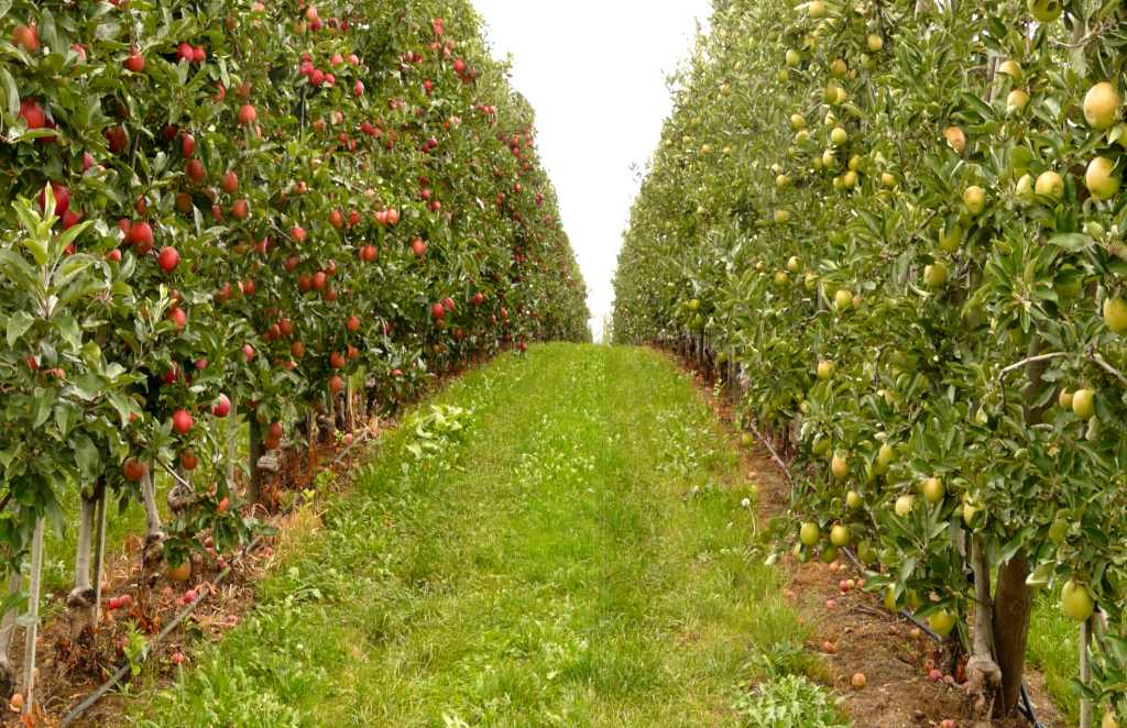 Cross-pollination, the key to increasing fruit harvests & growing new flowers