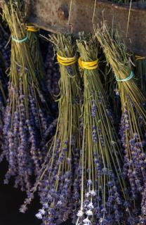 Bunches of lavender drying in the shade.