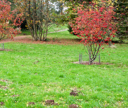 Lawn and grass in fall, the right advice